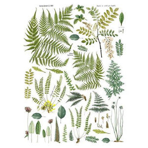 FRONDS BOTANICAL DECOR TRANSFER (24X33)
