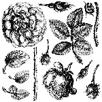 IOD LADY OF SHALLOTT DECOR STAMP (12X12) Iron Orchid Design