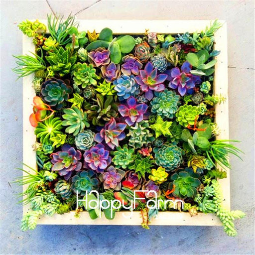 100 Pieces/Bag Best-Selling!Succulent Cactus Seeds Lotus Lithops Bonsai Plants Home Gardening Flower-Garden Supplies-HappyFarm Store-EpicWorldStore.com