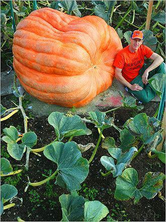 20Pcs Giant Pumpkin Seeds Halloween Pumpkin Organic Seeds Vegetables Nutrient-Rich Food Non-Gmo-Garden Supplies-HappyFarm Store-EpicWorldStore.com