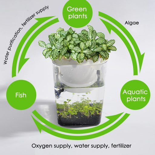 Anti Fall Fish Vegetables Symbiotic Water Grass Desktop Mini Fish Tank Ecological Plastic Convenient-Aquariums & Tanks-Norpet Store-White-A-EpicWorldStore.com