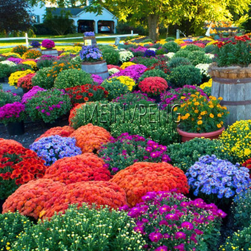 Genuine!100Pcs/Bag Ground Cover Chrysanthemum Bonsai Easy To Grow Flower Plant For Home Garden-Bonsai-Mask World Store-MIX-EpicWorldStore.com