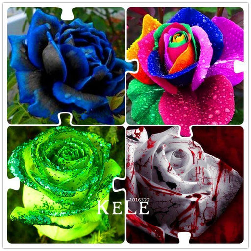 Time-Limit!! 50 Seeds/Bag Rainbow Rose Seeds, Different Colors Rare Rose, Beautiful Rose Bonsai-Garden Supplies-enjoymygarden Store-MIX-EpicWorldStore.com