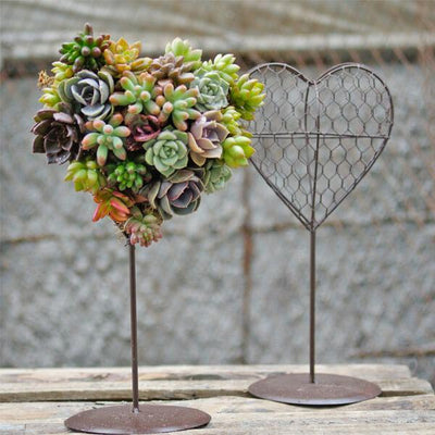 Heart-shaped Succulent Flower Pot