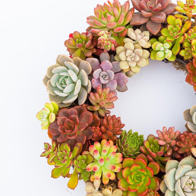 Wreath SUCCULENT FLOWER POT