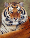 5D Diy Diamond Painting Kit - Tiger