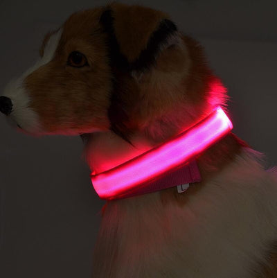 DOGSAFETY™️ GLOW-IN-THE-DARK LED SAFETY COLLAR