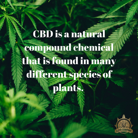 CBD is a natural compound in many plants