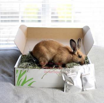 smallpetselect-uk,1st Cutting Timothy Hay