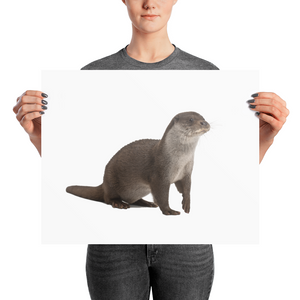 European-Otter Photo paper poster