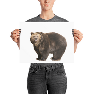 Brown-Bear- Photo paper poster