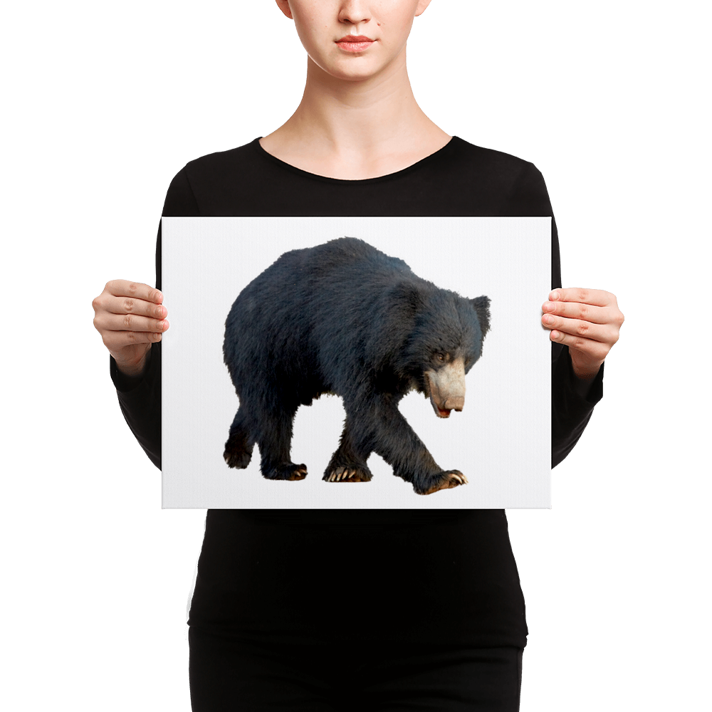 Sloth-Bear Canvas