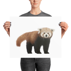 Red-Panda Photo paper poster