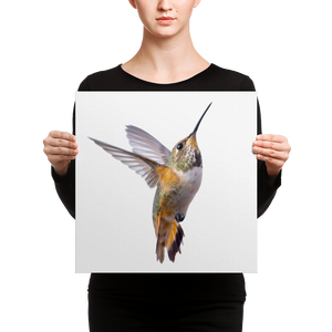 Hummingbird Canvas