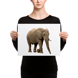 African-Forrest-Elephant Canvas