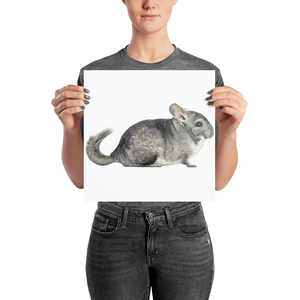 Chinchilla Photo paper poster