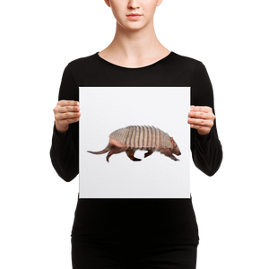 Armadillo Canvas
