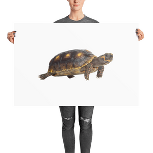 Tortoise Photo paper poster