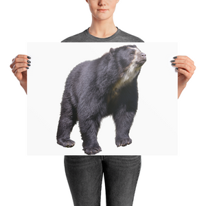 Specticaled-Bear Photo paper poster