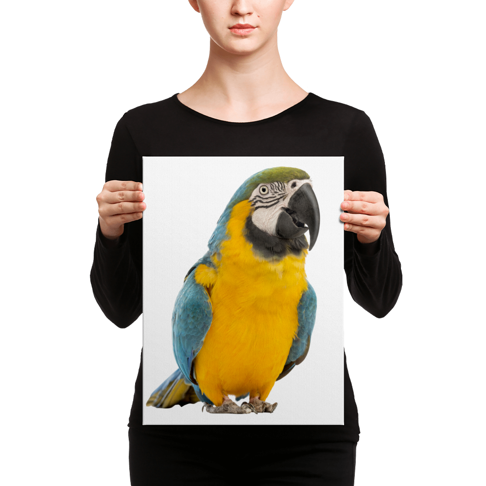 Macaw Canvas