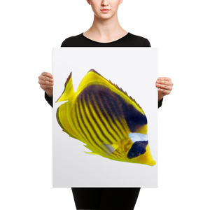 Butterfly-Fish Canvas