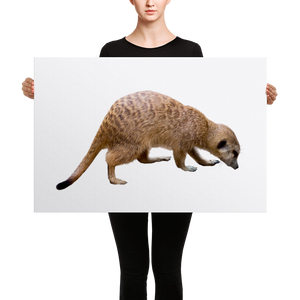 Mongoose Canvas
