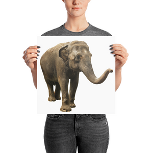 Indian-Elephant Photo paper poster