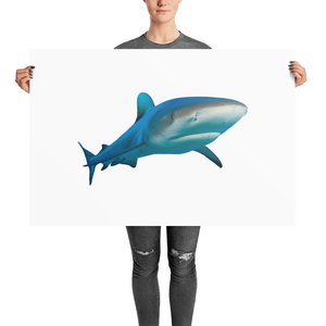 Great-White-Shark Photo paper poster