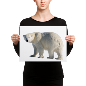 Polar-Bear Canvas
