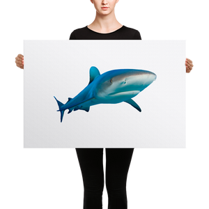 Great-White-Shark Canvas