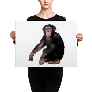 Chimpanzee Canvas