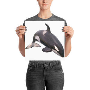 Killer-Whale Photo paper poster