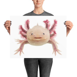 Axolotle Photo paper poster