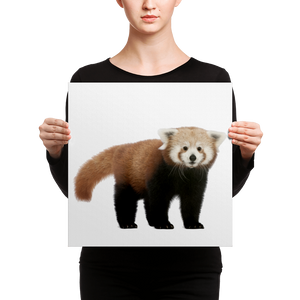 Red-Panda Canvas