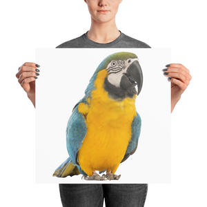 Macaw Photo paper poster