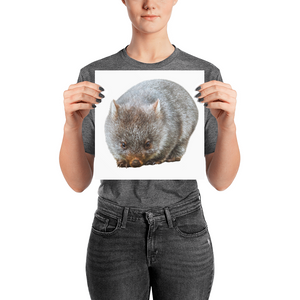 Wombat Photo paper poster