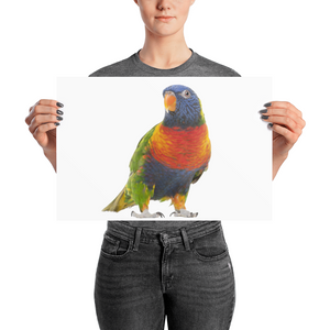 Parrot Photo paper poster