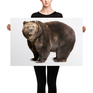 Brown-Bear Canvas