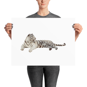 White-Tiger Photo paper poster