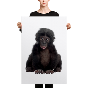 Bonobo Canvas