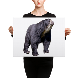 Specticaled-Bear Canvas