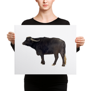 Water-Buffalo Canvas