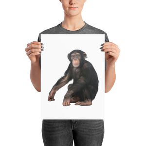 Chimpanzee Photo paper poster