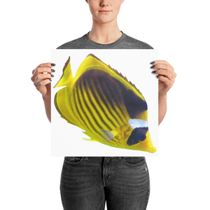 Butterfly-Fish Photo paper poster