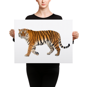 Siberian-Tiger Canvas