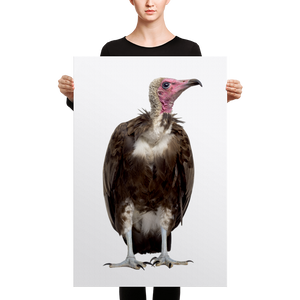 Vulture Canvas