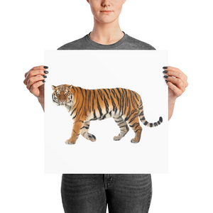 Siberian-Tiger Photo paper poster