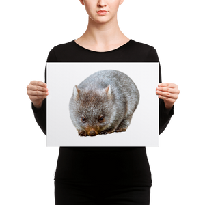 Wombat Canvas