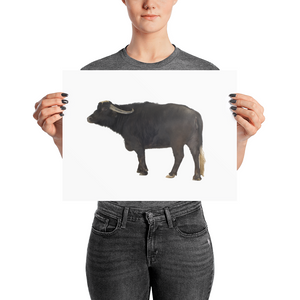 Water-Buffalo Photo paper poster