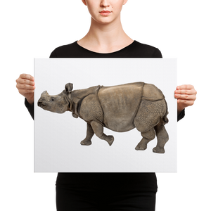 Indian-Rhinoceros Canvas